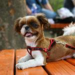 Addestramento del cane al guinzaglio