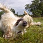 Come addestrare un cane con il clicker