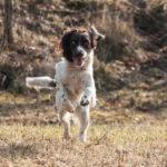 Il tuo cane è un cacciatore? Ecco come addestrarlo!