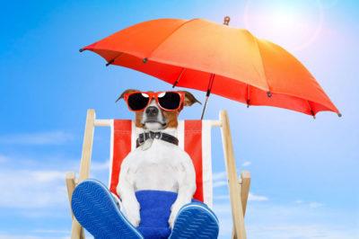 Come capire se il tuo cane ha un colpo di calore?