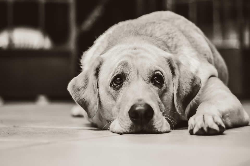 Il tuo cane ha la diarrea? Ecco come curarlo!