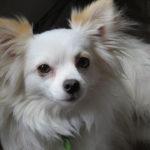 Cura del pelo del cane: ecco come funziona