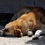 Come curare e trattare il colpo di calore nel cane