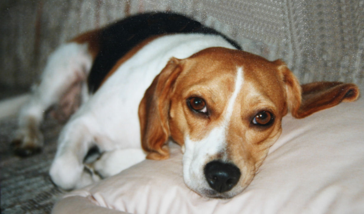 Disturbi Digestivi del Cane