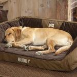 Come scegliere il lettino per cani?