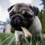Come scegliere lo snack giusto per il cane?