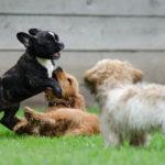 Socializzazione cucciolo di cane, come fare
