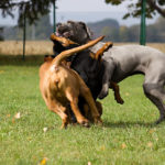 Socializzazione del cucciolo di cane, ecco gli errori da evitare