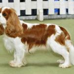 Mantello del cane: ad ogni pelo la sua spazzola!