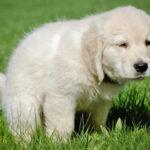 Come addestrare un cane a fare i bisogni fuori casa