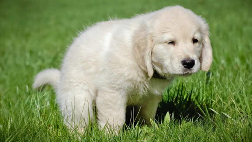 Come addestrare il cane a fare i bisogni fuori casa