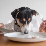 Alimentazione del cane: i miti da sfatare