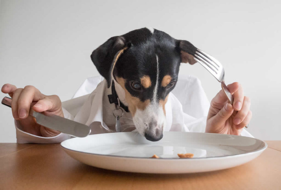 Alimentazione del cane, i miti da sfatare