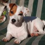 Come educare un cane: gli errori da non commettere