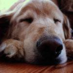 Quanto tempo deve dormire un cane?