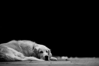 Leishmaniosi del cane, ecco 4 regole per prevenirla