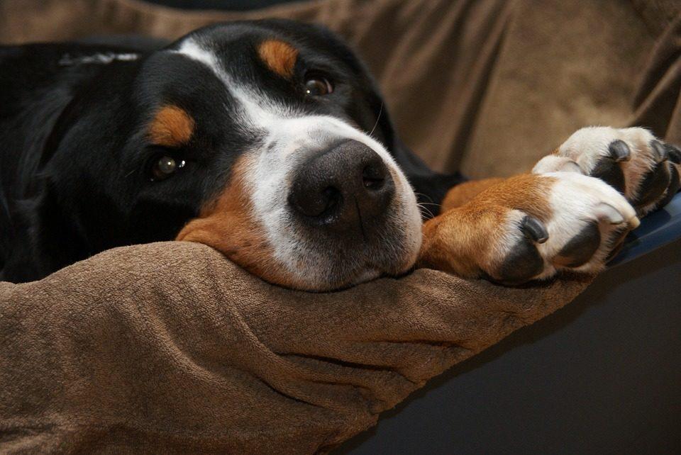 Odore del tuo cane