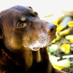 Cane anziano: i cambiamenti dopo i 10 anni