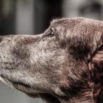 Cani anziani: ecco 5 cose che dovresti sapere