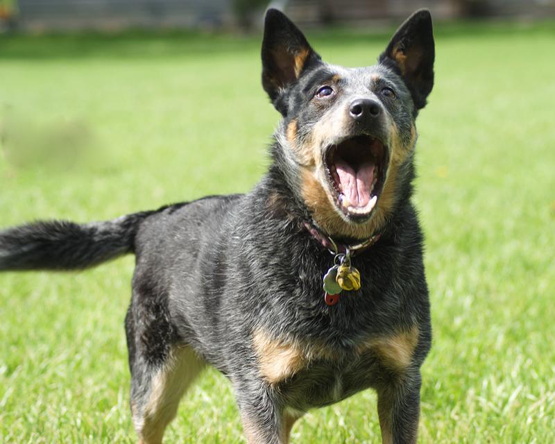 Rabbia nel cane: sintomi, cura e prevenzione