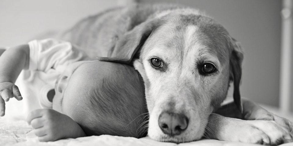 Cani e bambini: ecco 4 consigli per una convivenza felice