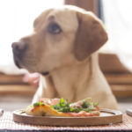 Cosa fare quando il cane non mangia?