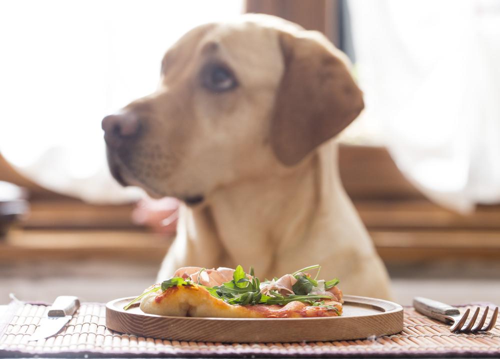Cosa fare se il tuo cane non mangia?
