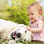 Come educare un cane all'arrivo di un neonato