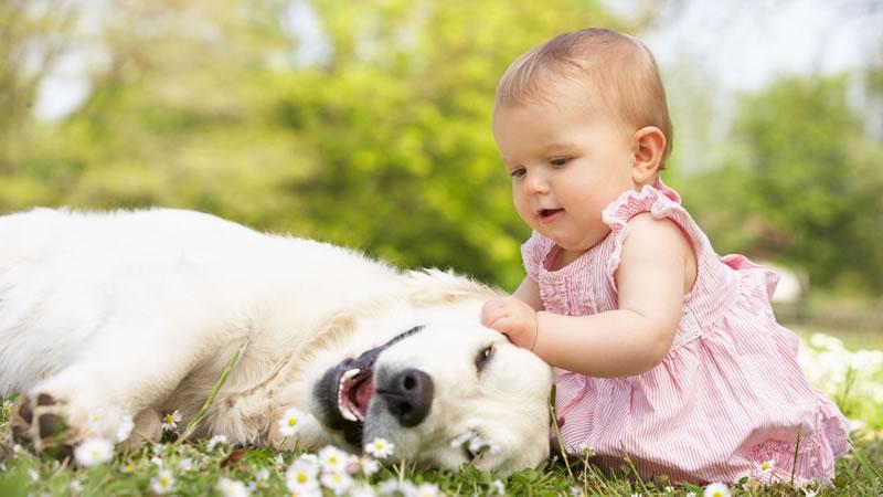 Come educare il cane all'arrivo di un neonato in casa
