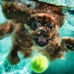Insegnare cane a nuotare