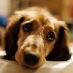 Micosi nel cane: sintomi, prevenzione e rimedi