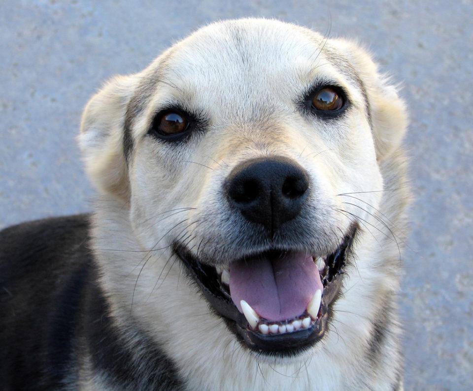 Come pulire i denti del cane: ecco alcuni consigli utili