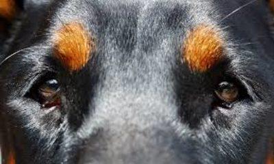 Come prevenire la cataratta nel cane