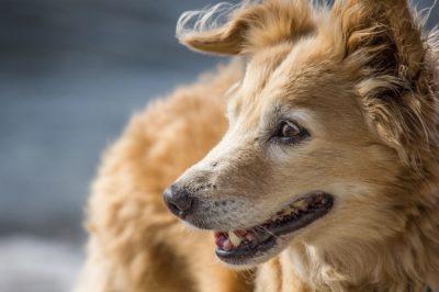 Come prevenire l'alitosi nel cane