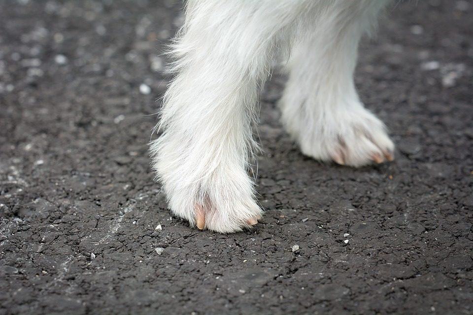 Come pulire le zampe del cane