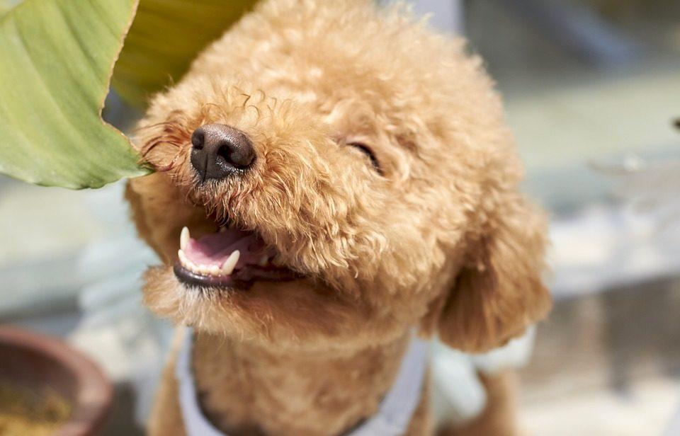 Come determinare l'età del cane dai denti