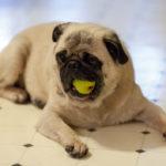 Dieta grain free per cani: in cosa consiste?
