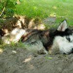 Perché i cani fanno le buche?