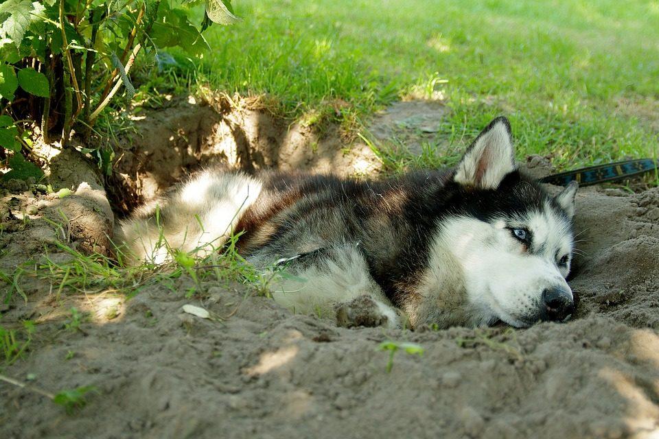 Perchè i cani scavano le buche?