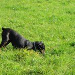 Come impedire a un cane di scavare in giardino
