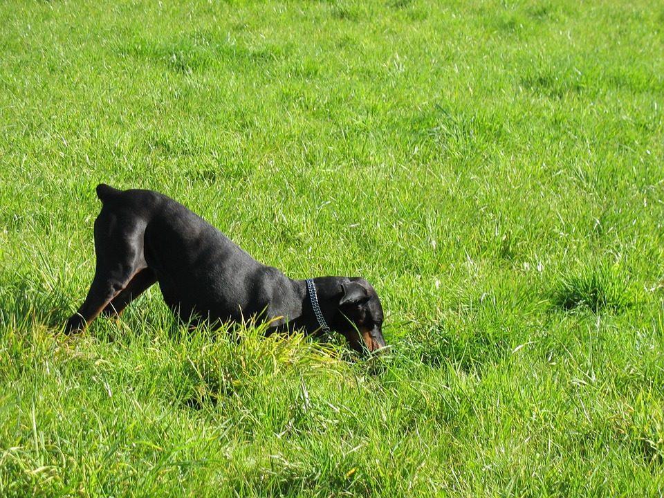 Impedire ad un cane di scavare: altri rimedi