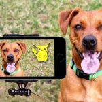 Articoli per cani, ecco quali sono i più importanti