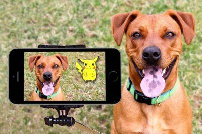 Articoli per cani: ecco quali sono i 5 più importanti