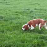 Addestrare cane da tartufo