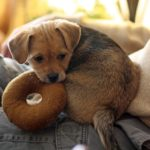 Alimentazione del cane: lo svezzamento