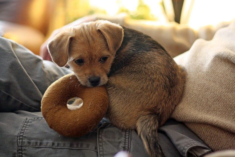 Il cibo migliore durante lo svezzamento del cane