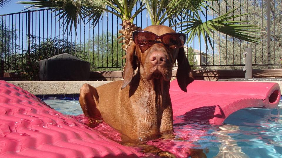 Come proteggere un cane dai parassiti estivi