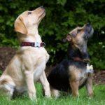Addestramento del cane a stare seduto