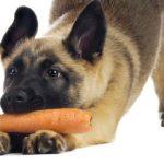 Dieta VEG per il cane