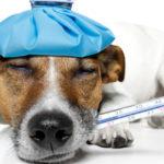 I presidi per cani che non dovrebbero mai mancare in casa